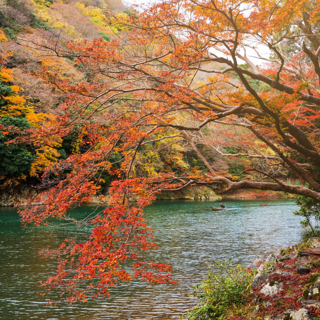 """Autumn foliage colors at Arashiyama"" stock image"