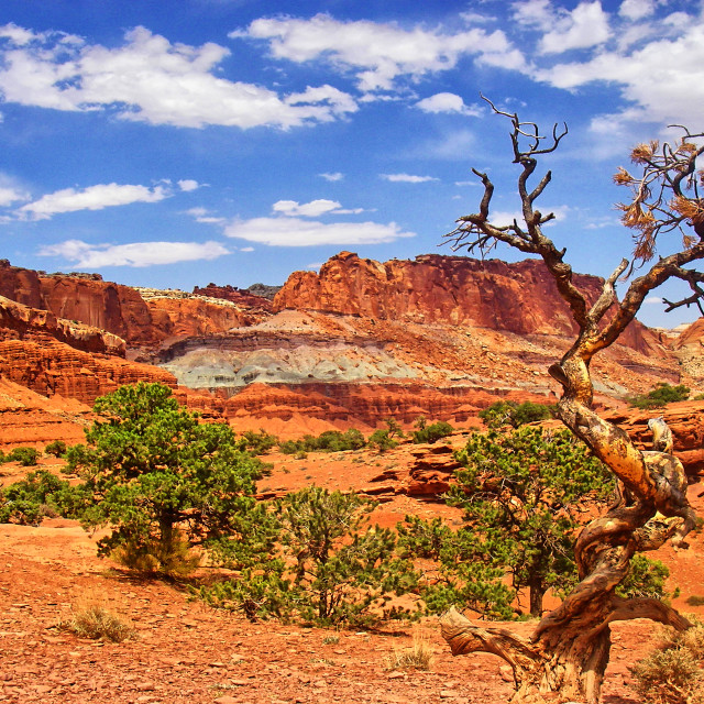 """""""Capitol Reef 033"""" stock image"""