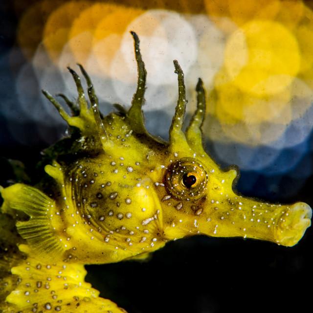 """Sea Horse"" stock image"
