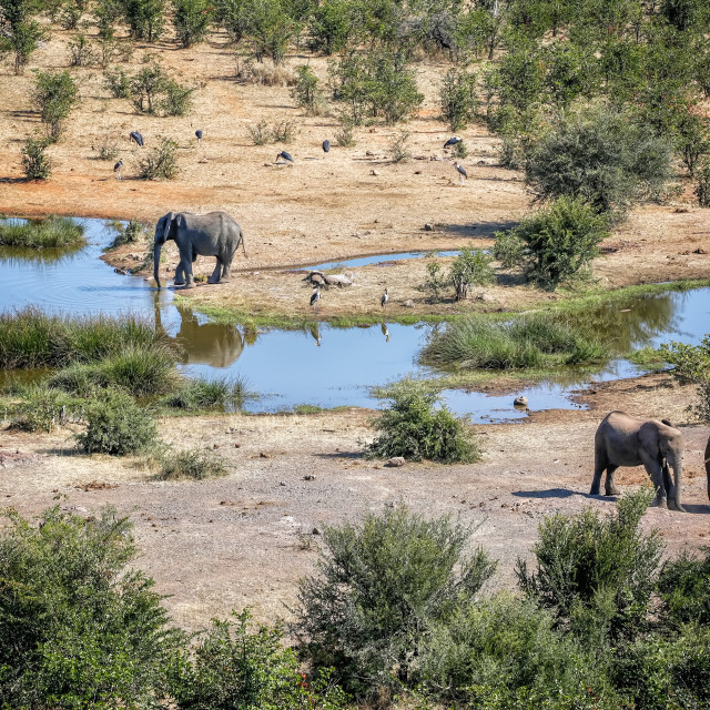 """Elephants at Waterhole"" stock image"