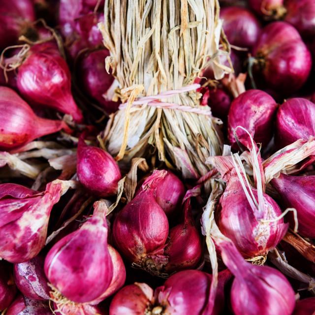 """allium ascalonicum (shallots) or red onion"" stock image"