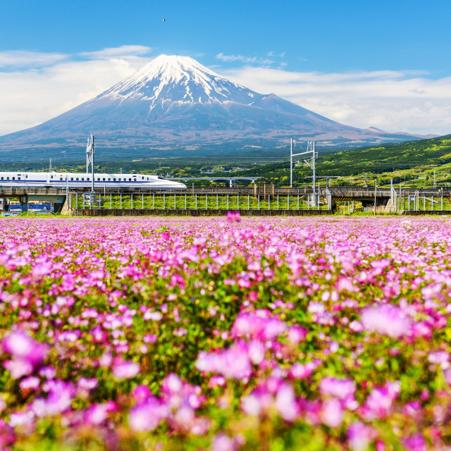 """Bullet train pass Mt. Fuji"" stock image"