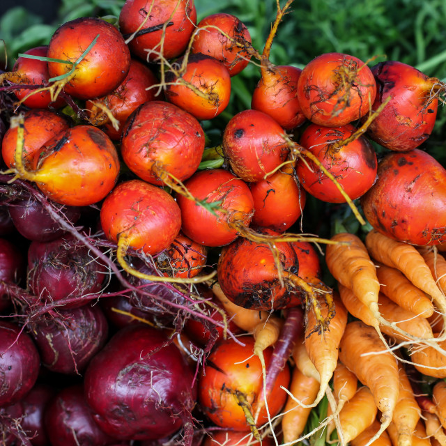 """Fresh red beets and carrots"" stock image"