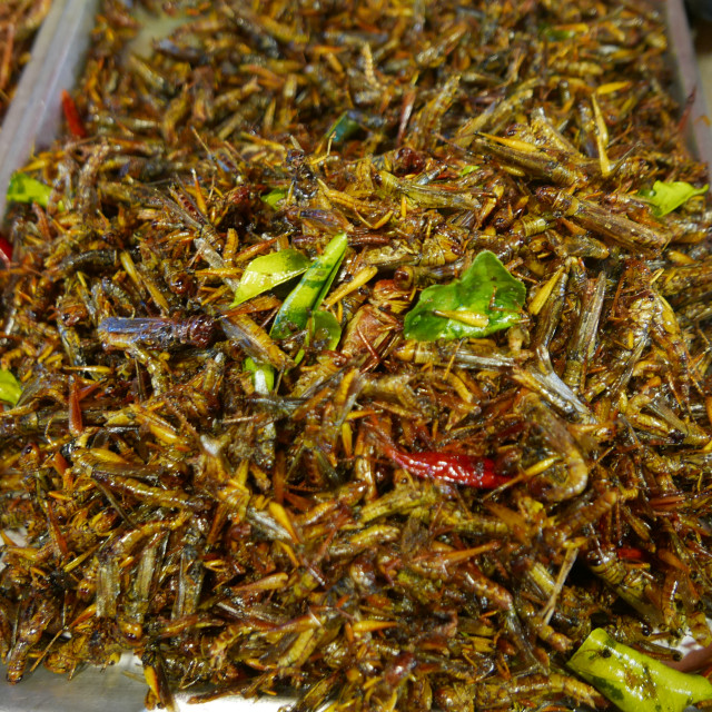 """Deep Fried bugs as snacks sold at local night market in Bangkok"" stock image"