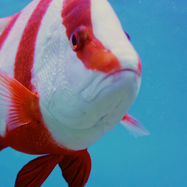 """""""Fish 