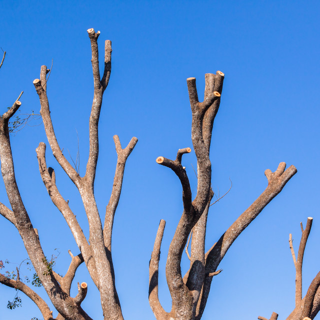 """""""Tree Bare Branches Blue"""" stock image"""