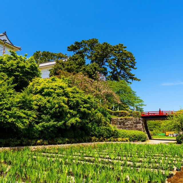 """Red bridge to Odawara castle"" stock image"