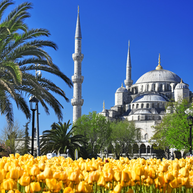 """""""Sultan Ahmed Mosque or Blue Mosque in Istanbul, Turkey"""" stock image"""