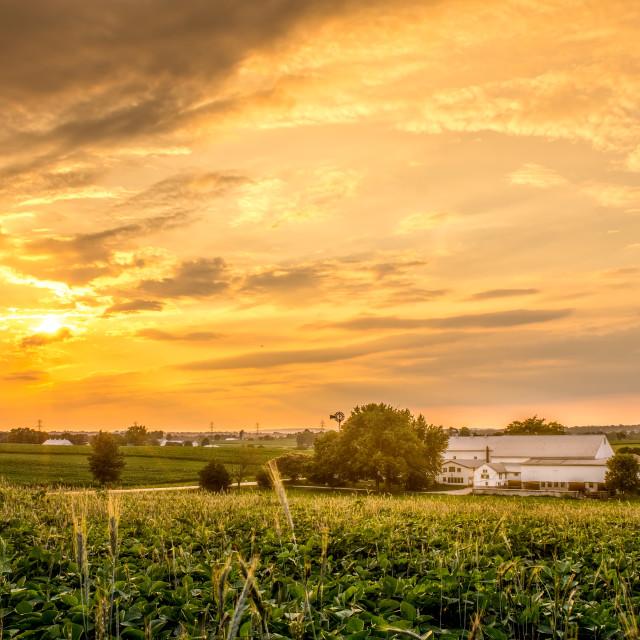 """Evening on the farm"" stock image"