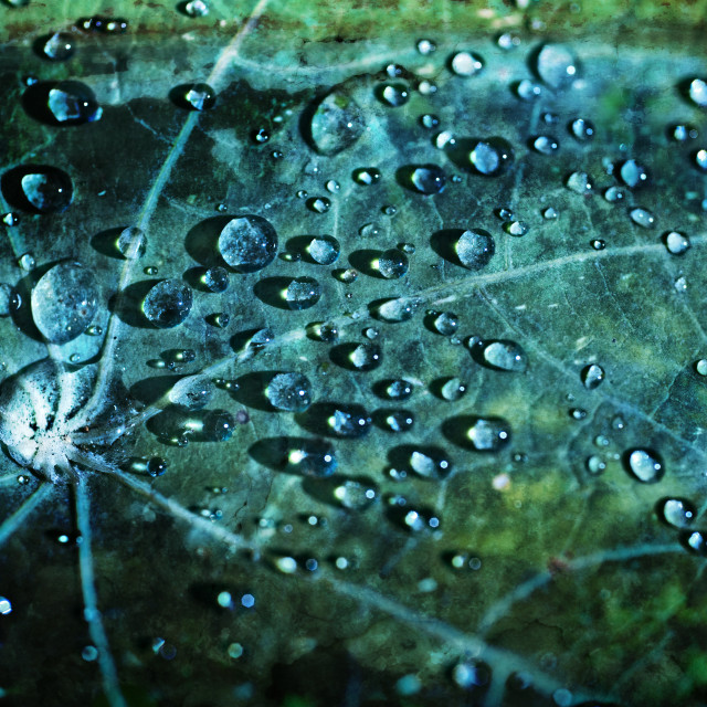 """Leaf drops and light #06"" stock image"