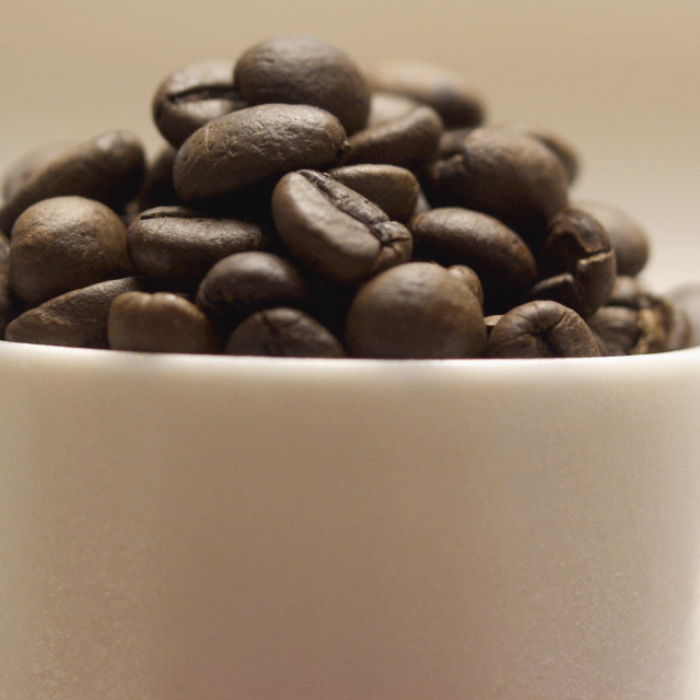 """""""Coffee Beans in a Cup"""" stock image"""