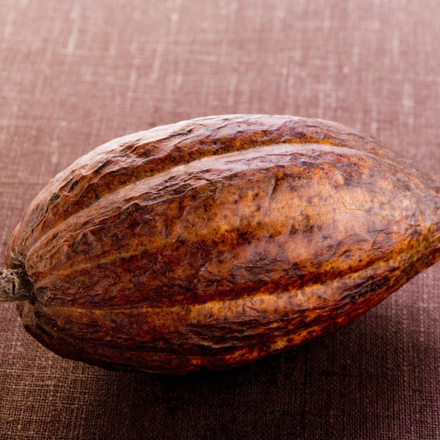 """Cacao pod on brown background"" stock image"