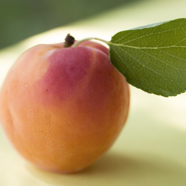 """""""An apricot"""" stock image"""