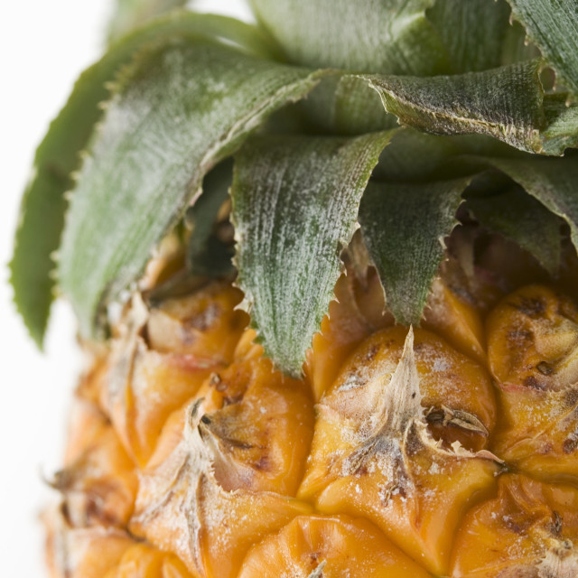 """""""Pineapple (close-up)"""" stock image"""