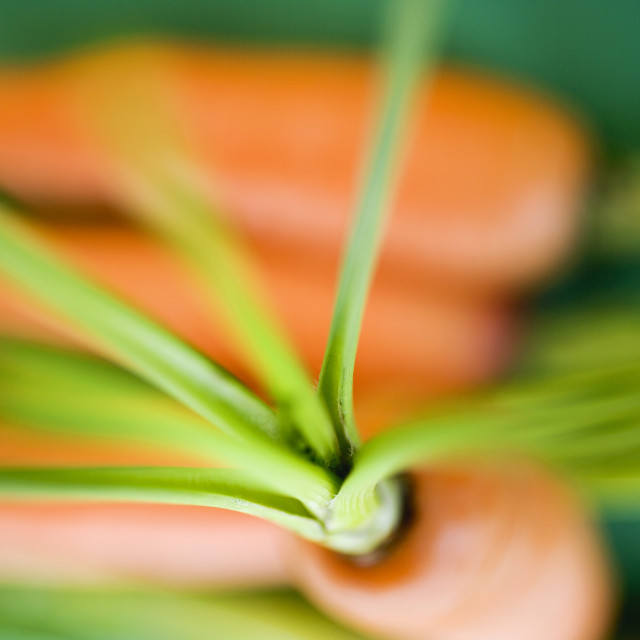 """""""Fresh carrots on green background"""" stock image"""
