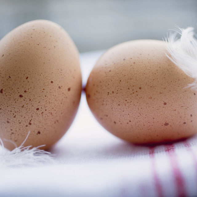 """""""Two brown eggs with feathers on tea towel"""" stock image"""