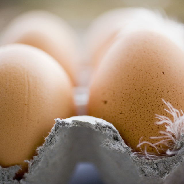 """""""Brown eggs with feathers in an egg box"""" stock image"""