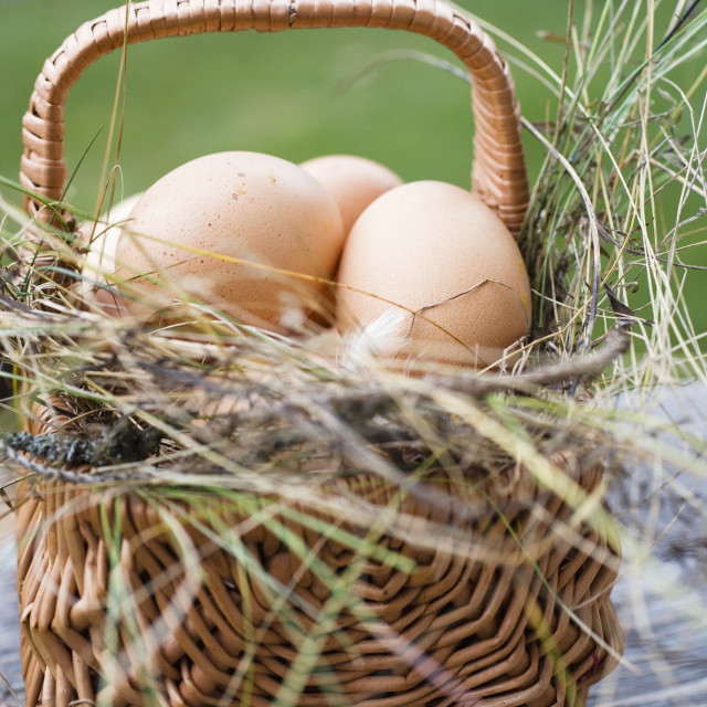 """""""Brown eggs in a basket with hay"""" stock image"""