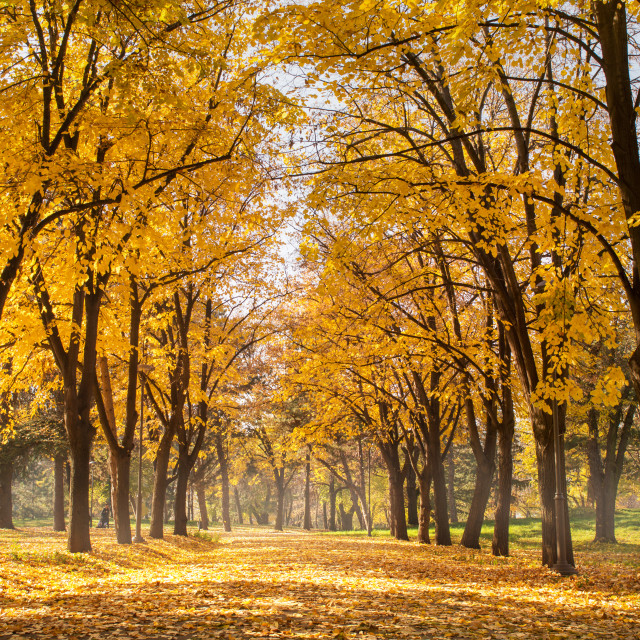 """Autumn park scene of a path in fallen leaves"" stock image"