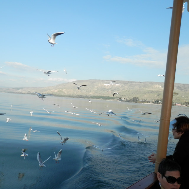 """Person watching seagulls in a boat ride in the Sea of Galilee"" stock image"