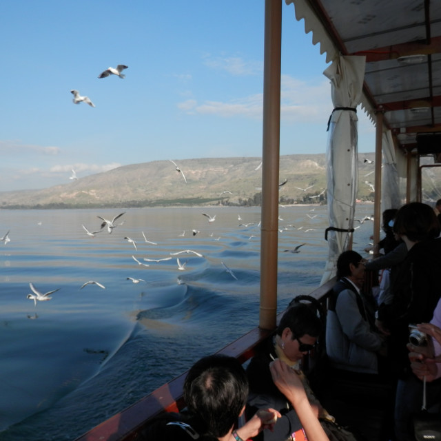 """Seagulls over the Sea of Galilee - Boat Ride"" stock image"