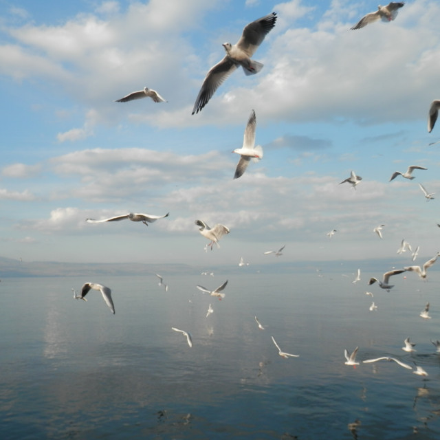 """Seagulls over the Sea of Galilee"" stock image"