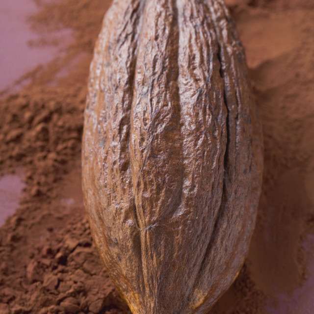 """Cacao fruit on cocoa powder"" stock image"