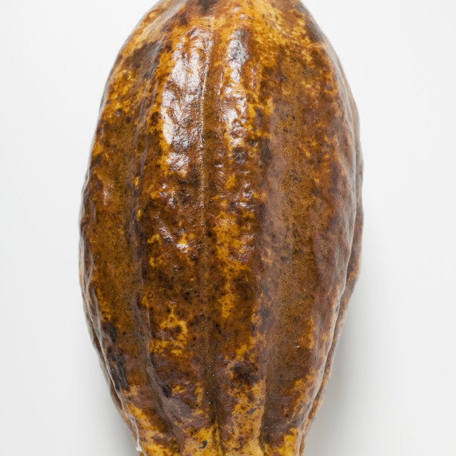 """A cacao fruit"" stock image"