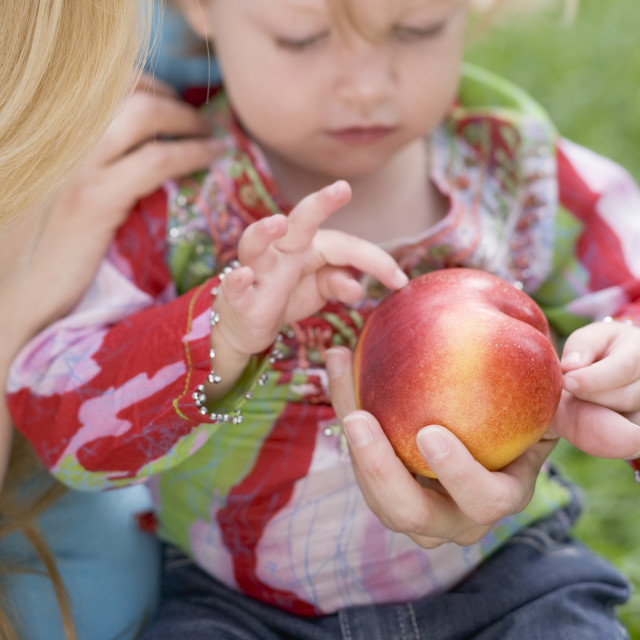 """Little girl looking at nectarine in mother's hand"" stock image"
