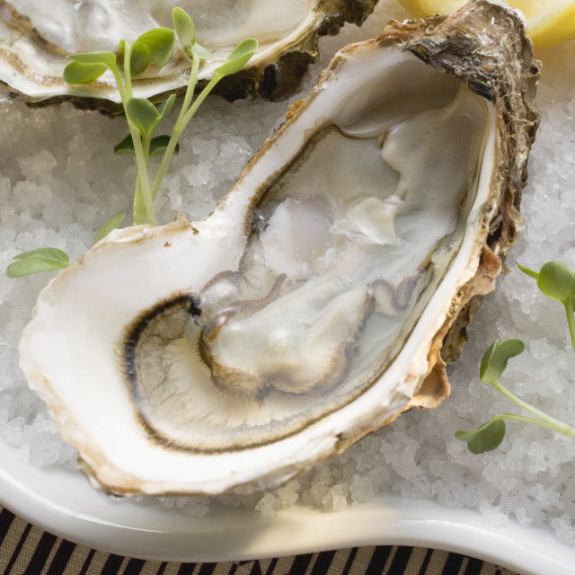 """Fresh oysters with lemon on crushed ice (close-up)"" stock image"