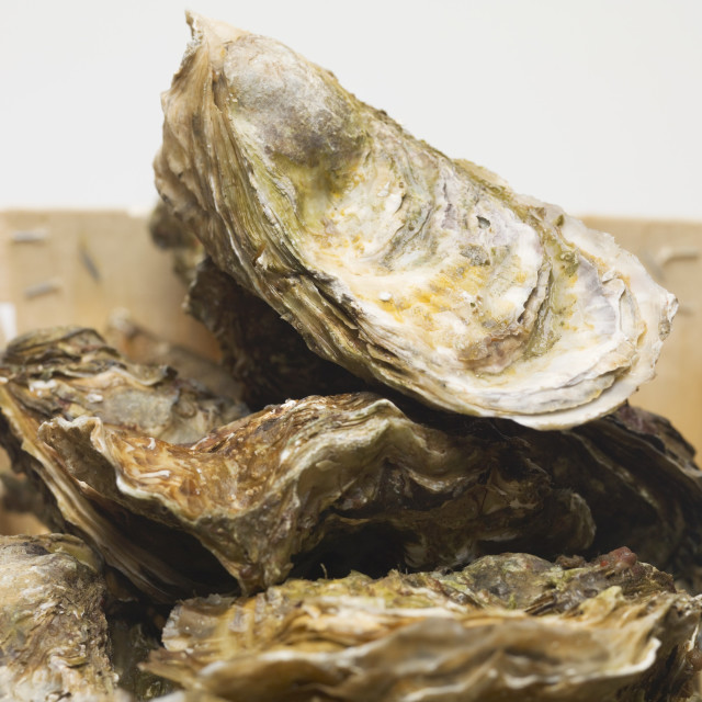 """Fresh oysters in woodchip basket (detail)"" stock image"