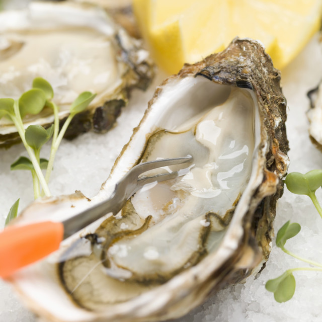 """Fresh oysters with cress and lemon"" stock image"