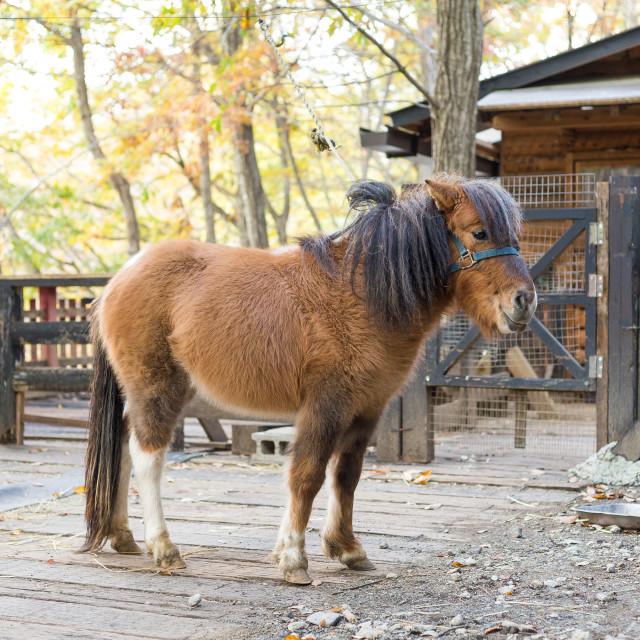 """Lovely Horse in farm"" stock image"