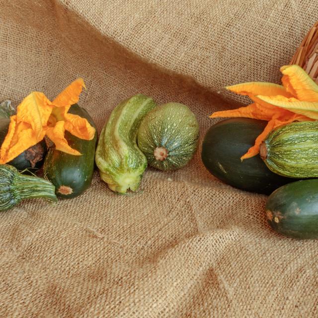 """Harvest of zucchini, still life on jute"" stock image"