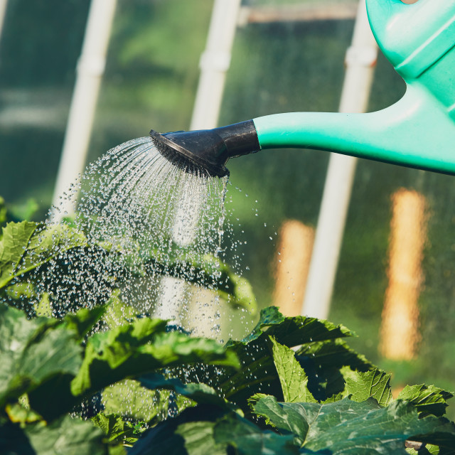 """Watering from plastic watering can on the garden."" stock image"