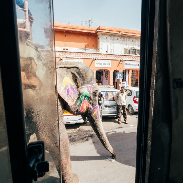 """""""Elephant Traffic"""" stock image"""