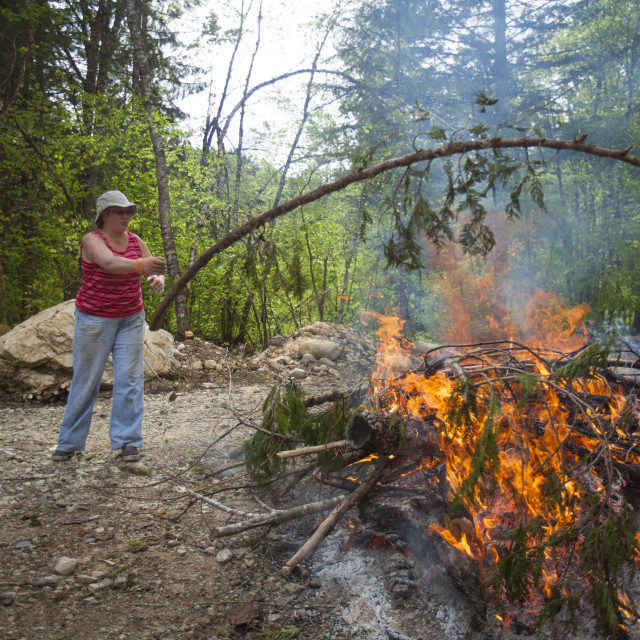 """A middle aged woman tosses a tree branch on a large fire while doing yardwork."" stock image"