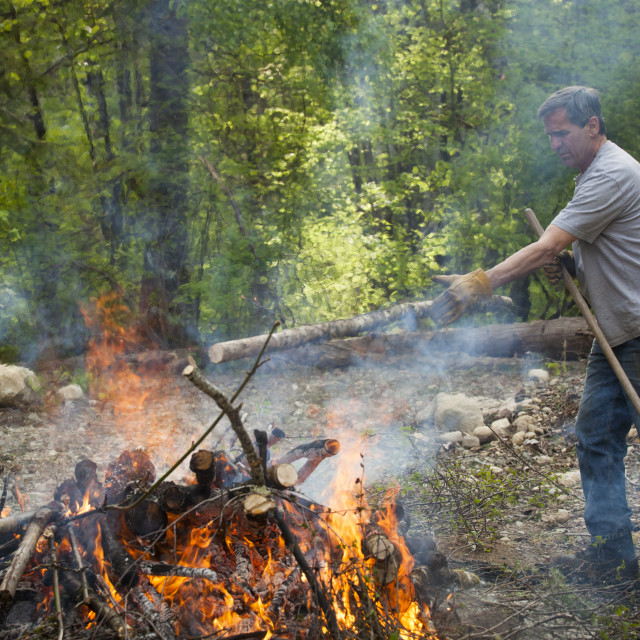 """A middle aged man tosses a tree branch on a large fire while doing yardwork."" stock image"