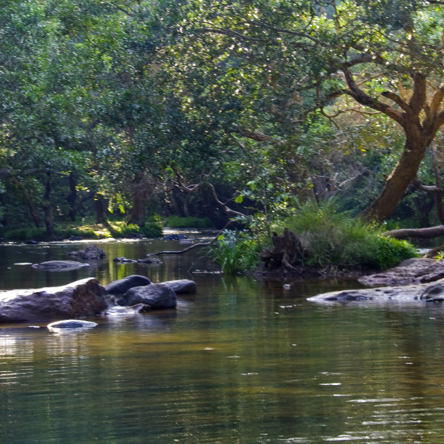 """""""River running in Forest"""" stock image"""