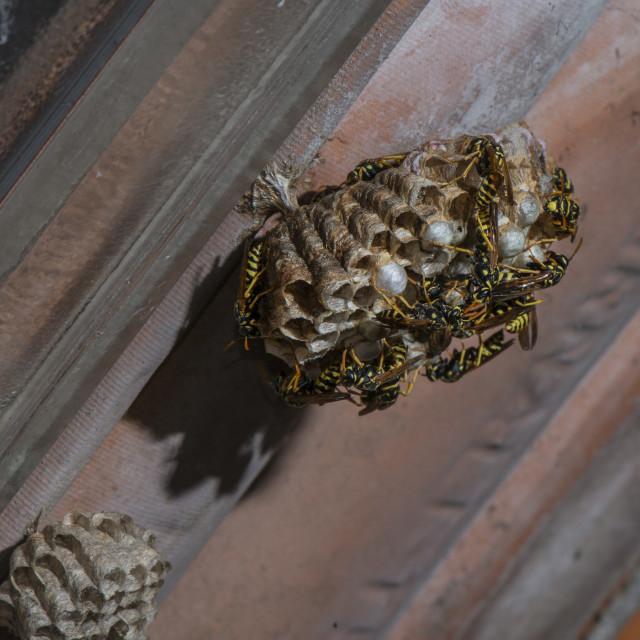 """Wasp's nest."" stock image"