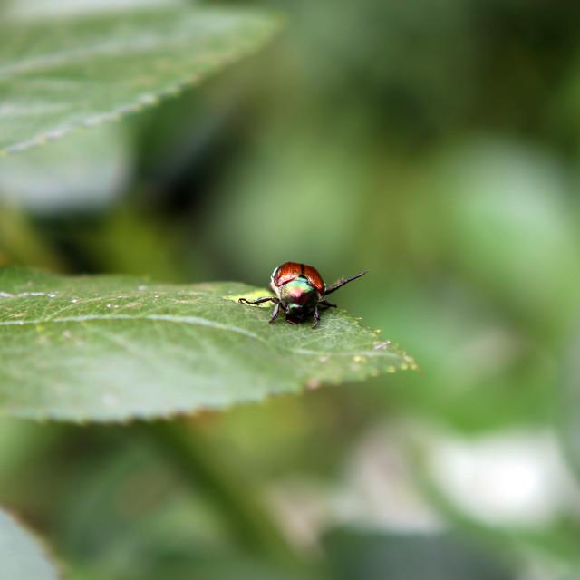 """""""Beetle"""" stock image"""