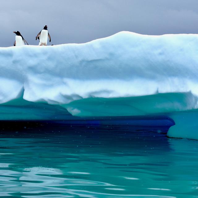 """Penguins on Iceberg in Antarctica"" stock image"