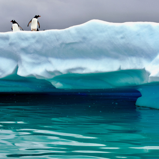 """Penguins on Iceberg in Antarctica"" stock image"