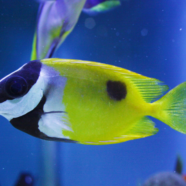 """""""color 
