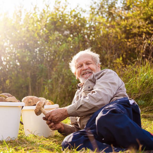 """""""Senior looks at mushrooms"""" stock image"""
