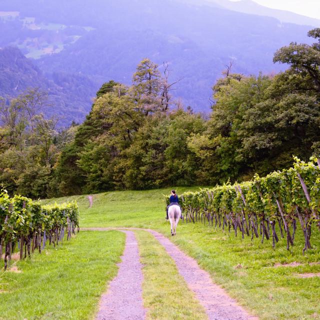 """Vineyard and Rider"" stock image"