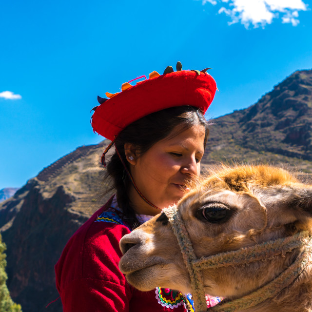 """Native Peruvian girl with her Lama in Sacred Valley, Cusco, Perl"" stock image"