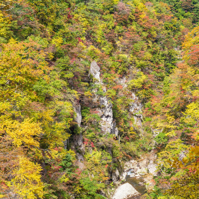 """Autumn foliage on the cliff"" stock image"