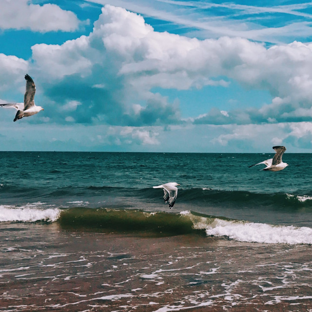 """Seagulls in flight in South Devon"" stock image"