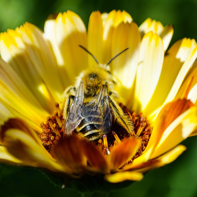 """""""Bee Day"""" stock image"""